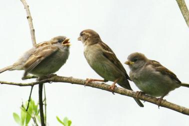 3 burung